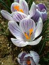 05-03-08whitepurple400