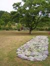 070510keisei_20