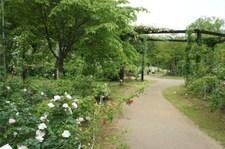 110516keisei_46