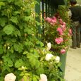 080515roseavenue_22