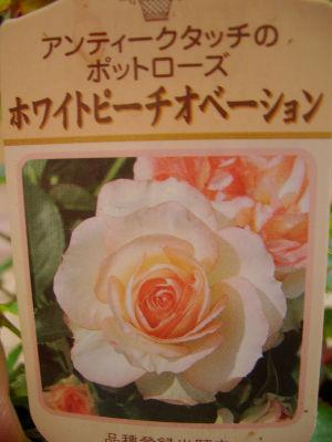 060517keisei_92300